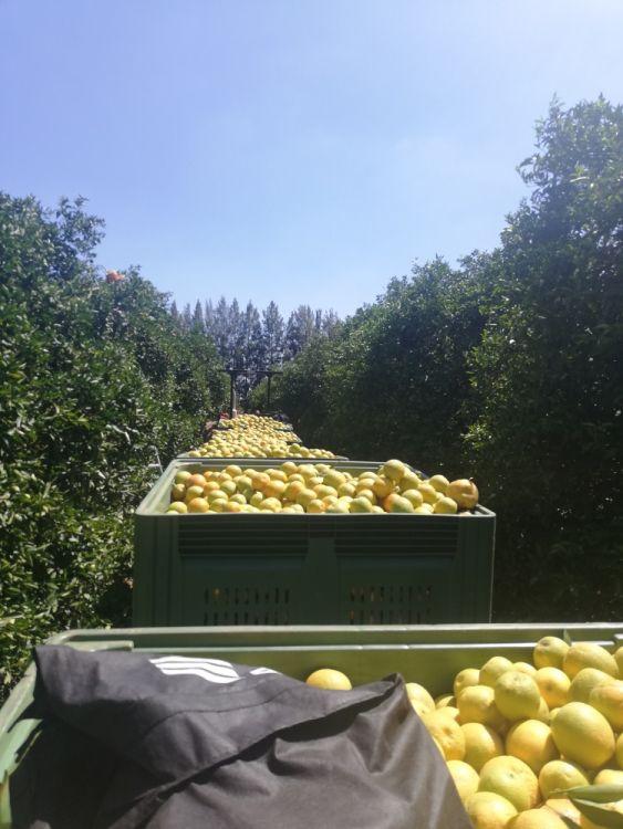 Viele Work & Traveller arbeiten auf einer Farm um das 2nd Year Visa zu erhalten.