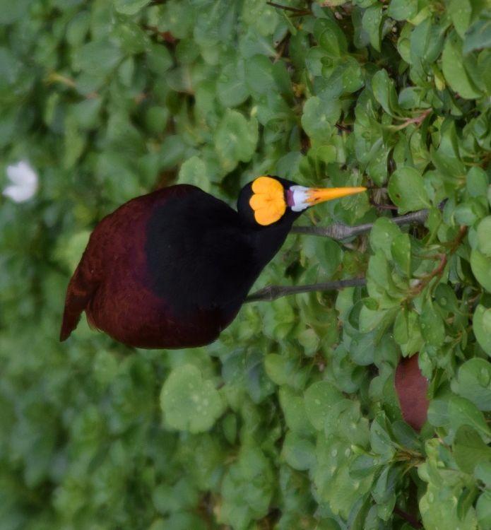 Einheimische Vogelart