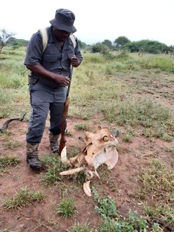 Ranger im Kruger Nationalpark