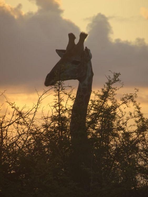 Eine Giraffe im Park