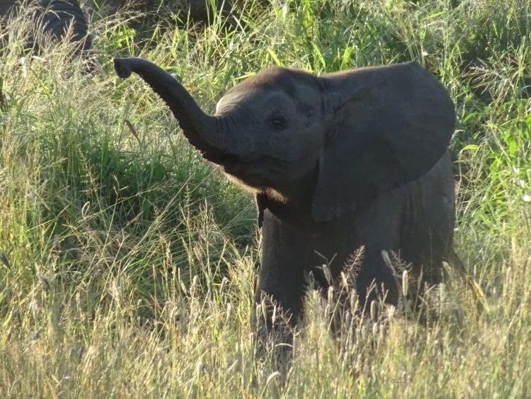 Ein Baby-Elefant