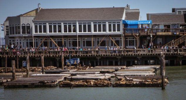Seelöwen Pier 39