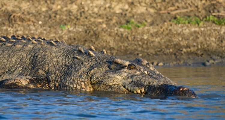Krokodil im Kakadu National Park
