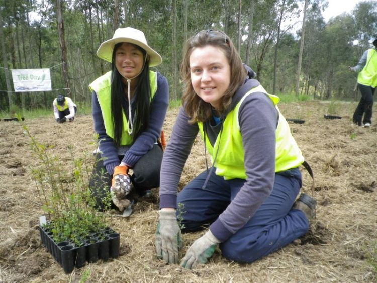 NSW 2012 - Tree Planting 2
