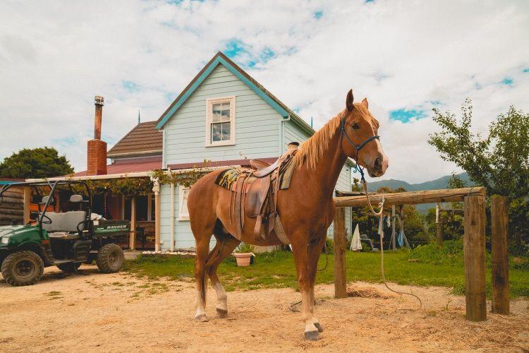 Pferderanch in Neuseeland