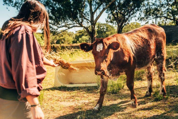 Auf der Rinderfarm mit anpacken