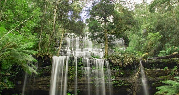 Wasserfall im tasmanischen Regenwald