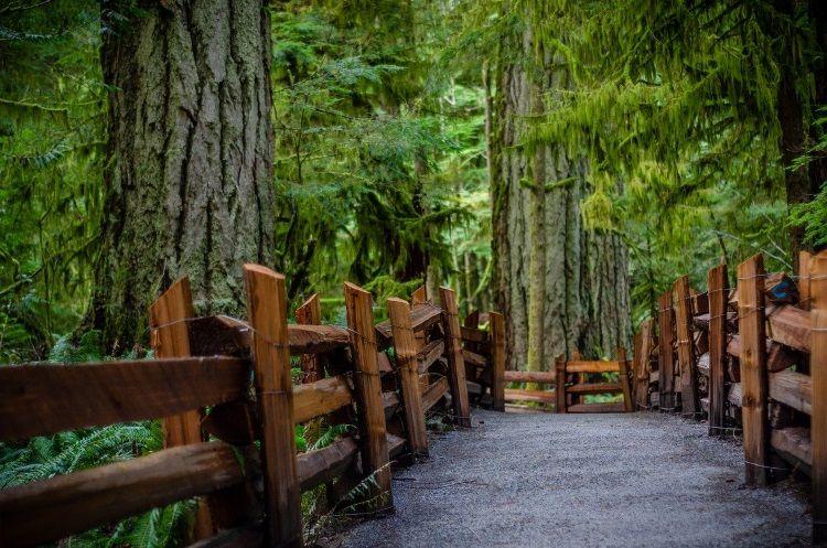 Die hohen Douglasien auf Vancouver Island sind ein echter Hingucker.