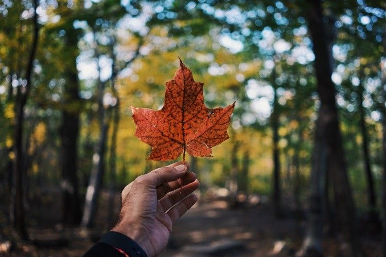 Reisetipps Kanada