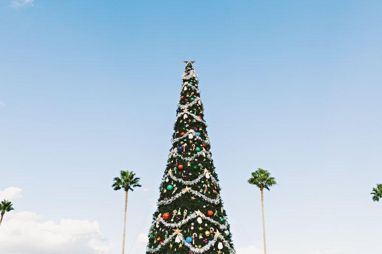 Christmas Abroad - Weihnachten weltweit mit AIFS